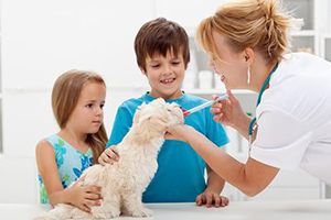Veterinarian Services and Pet Sales